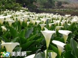 2016陽明山花季 | 花好時節