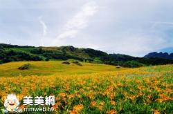 2016花蓮富里六十石山金針花季